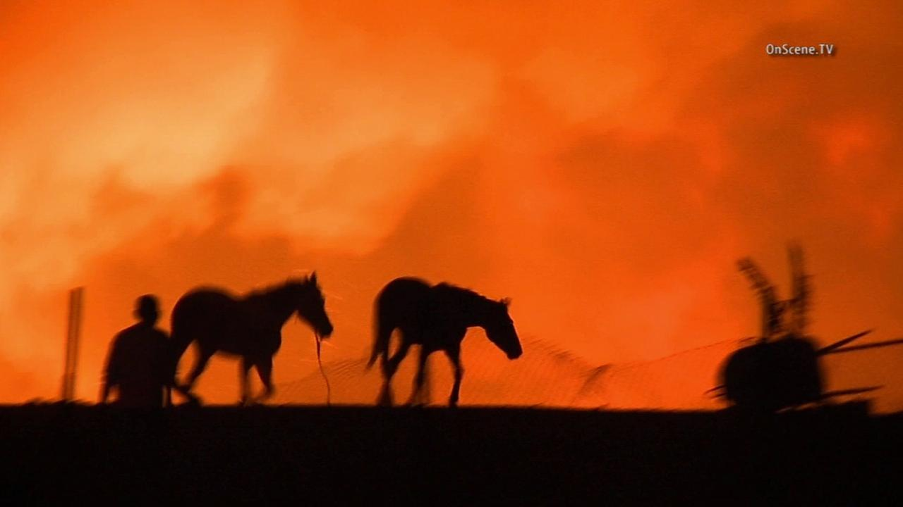 Many residents rushed to evacuate their horses after a fire erupted near the Prado Dam Saturday, April 18, 2015.