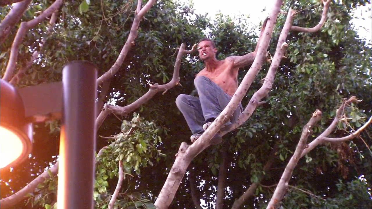 A shirtless man climbed a tree in downtown Los Angeles and refused to come down on Tuesday, April 28, 2015.