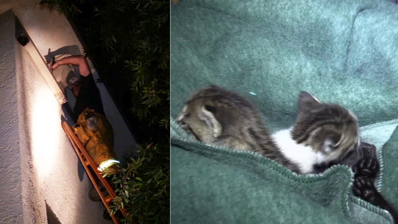 Los Angeles firefighters descended on an apartment complex in Toluca Lake overnight to save three kittens stuck inside a drain pipe.