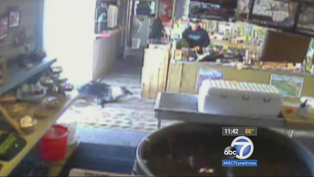 Surveillance video shows a seal waddling into an Oregon fish market, looking for a bite to eat.