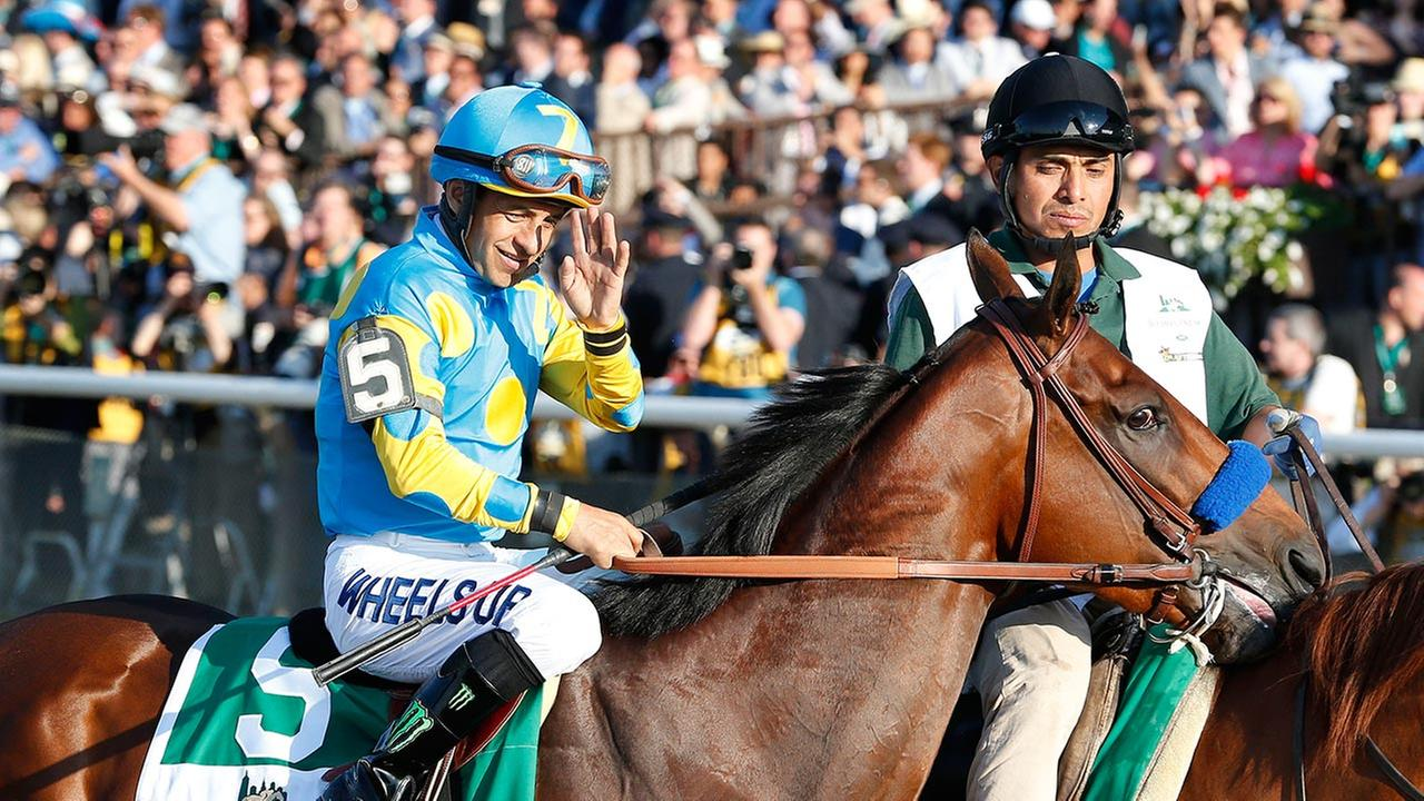 American Pharoah (5) with Victor Espinoza up parades to the starting gate before the 147th running of the Belmont Stakes horse race at Belmont Park, Saturday, June 6, 2015, in Elmont, N.Y.