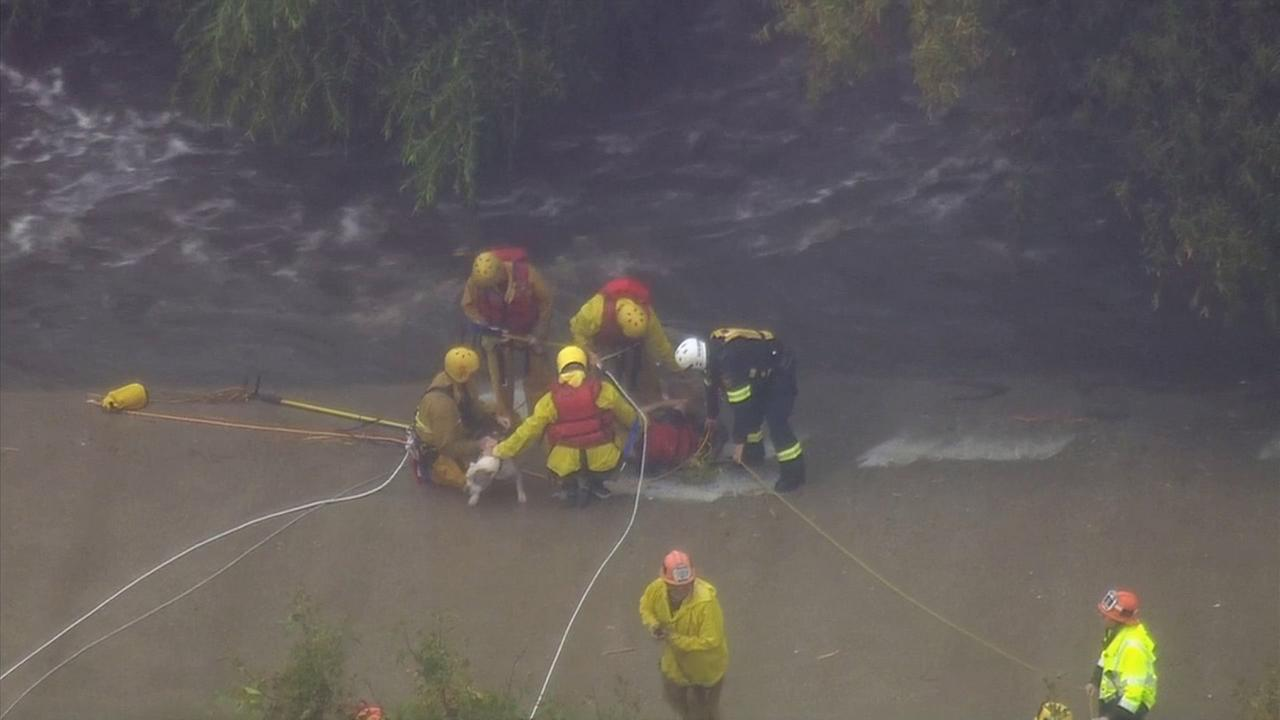 A person and a dog were pulled from a tree safely to dry ground by swift water rescue crews along the Los Angeles River on Tuesday, Sept. 15, 2015.