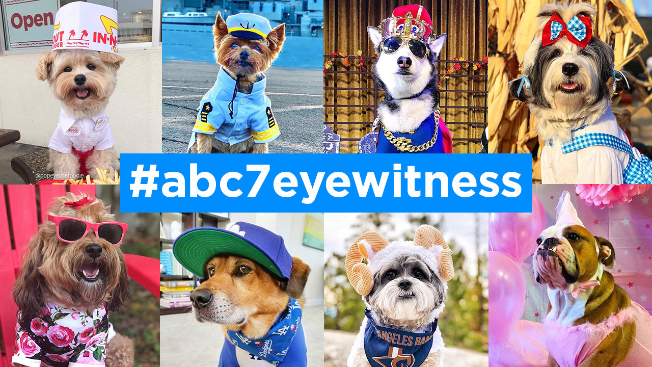 Its National Dress Up Your Pet Day, and ABC7 viewers are sharing their best dressed pets.