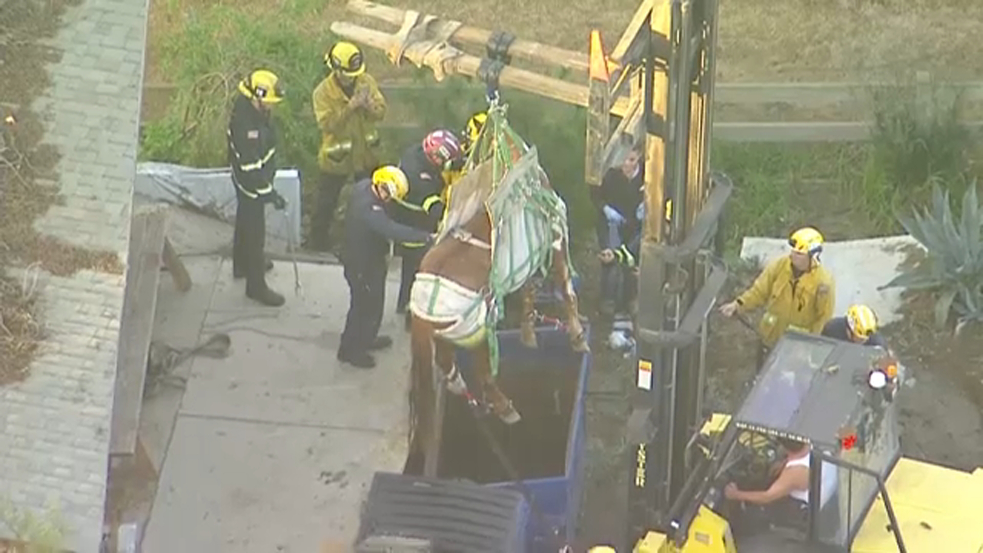 A horse was successfully rescued after becoming stuck inside of a dumpster in Huntington Beach on Friday, Jan. 18, 2019.