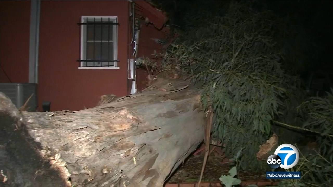 Massive tree crashes through roof of Woodland Hills restaurant