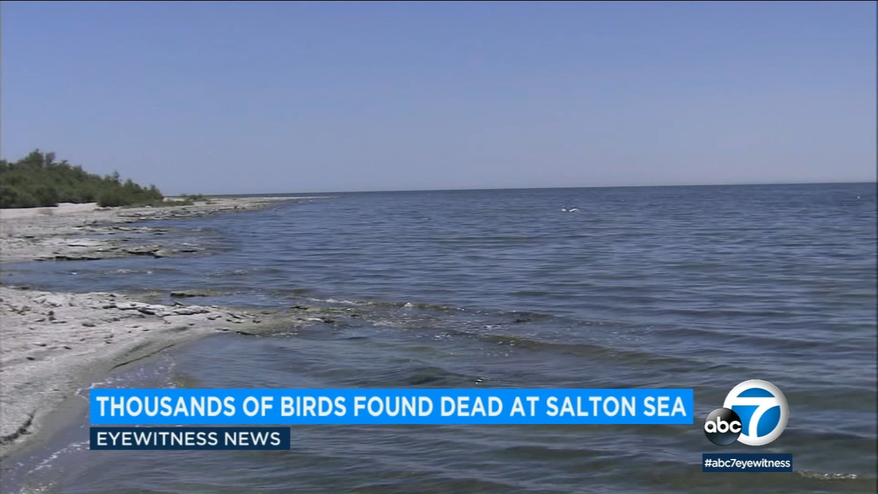 Thousands of birds have been found dead at the Salton Sea from avian cholera.