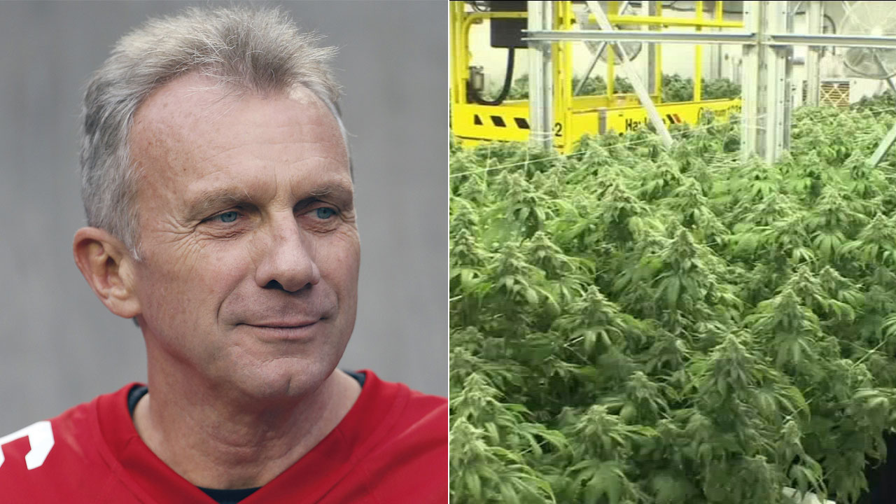 At left, in a Dec. 20, 2015, file AP photo, Joe Montana is shown during halftime of an NFL football game in Santa Clara, Calif. Right, a file photo shows marijuana.