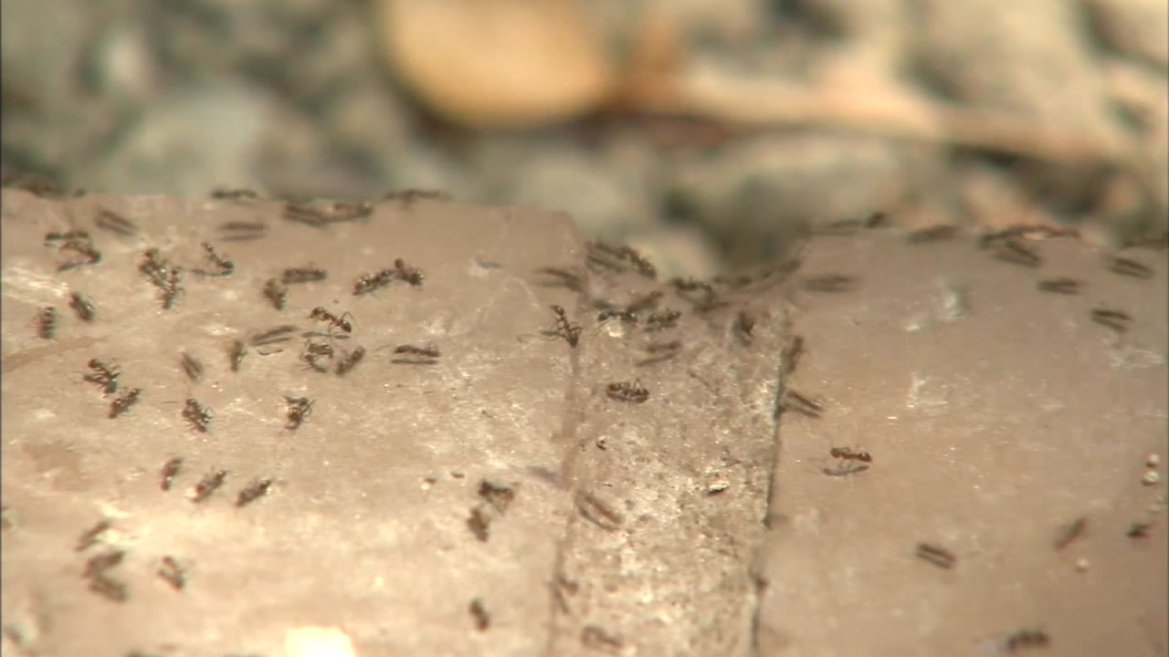 A trail of ants on pavement is shown in a photo.