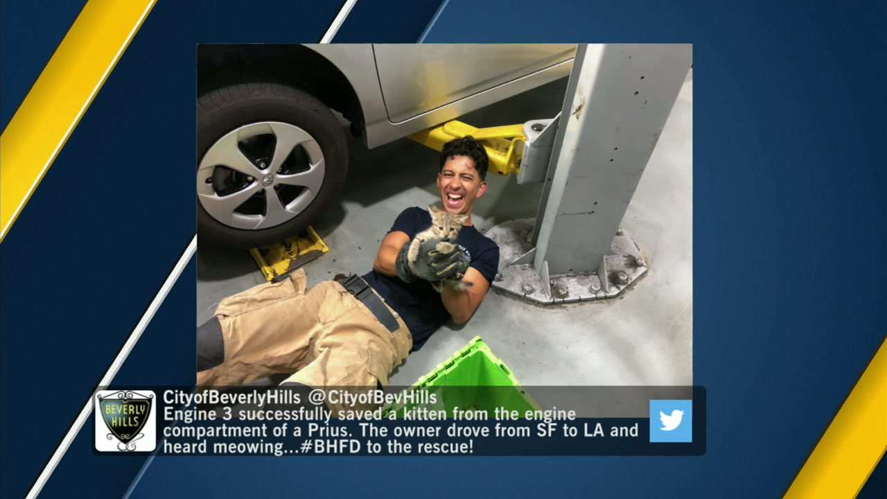 Beverly Hills firefighters rescued a kitten from the engine compartment of a Prius that traveled from San Francisco to Los Angeles.