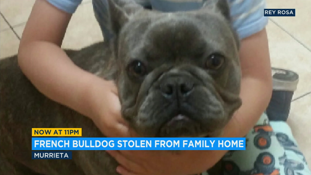 A devastated Murrieta family is looking for help finding their beloved French bulldog Smurfy, stolen from their home while they spent their Sunday at Disneyland.
