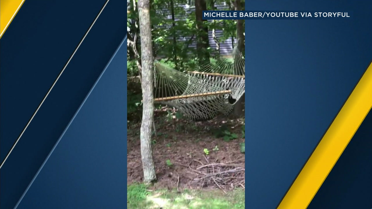 A black bear is shown relaxing and napping in a Florida mans hammock.