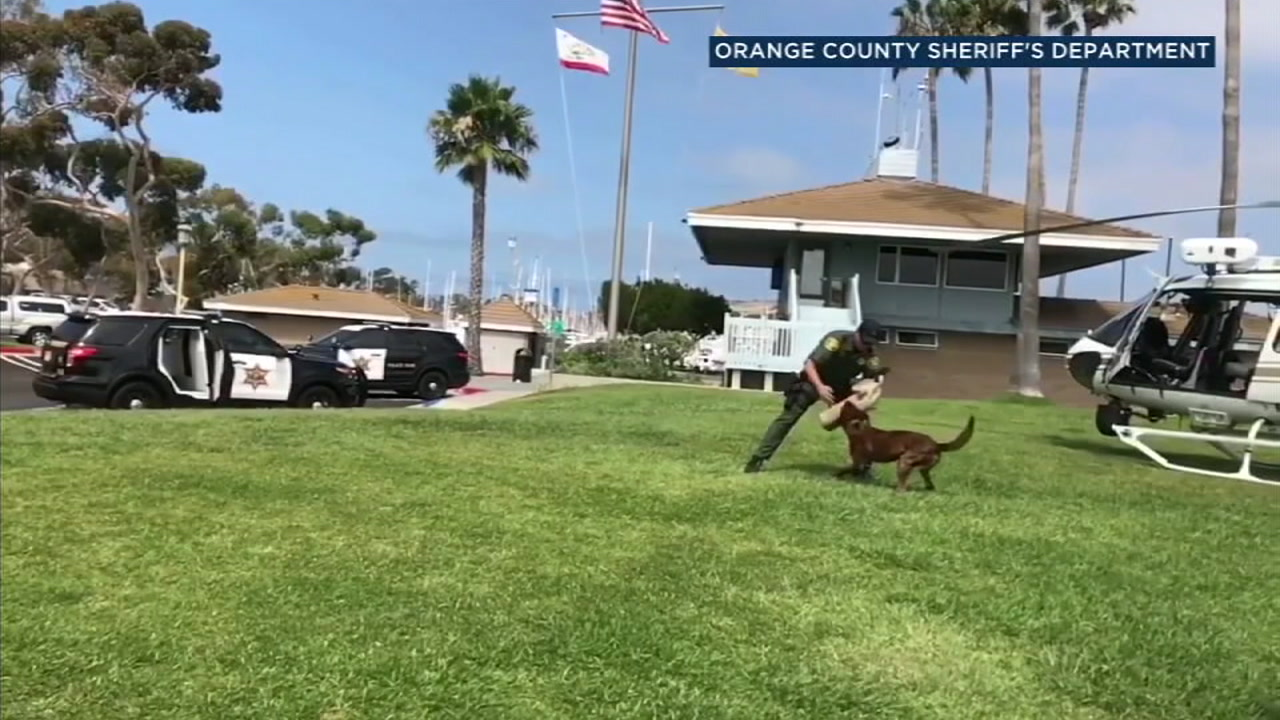 FILE - A dog is shown during an Orange County Sheriffs Department training exercise.