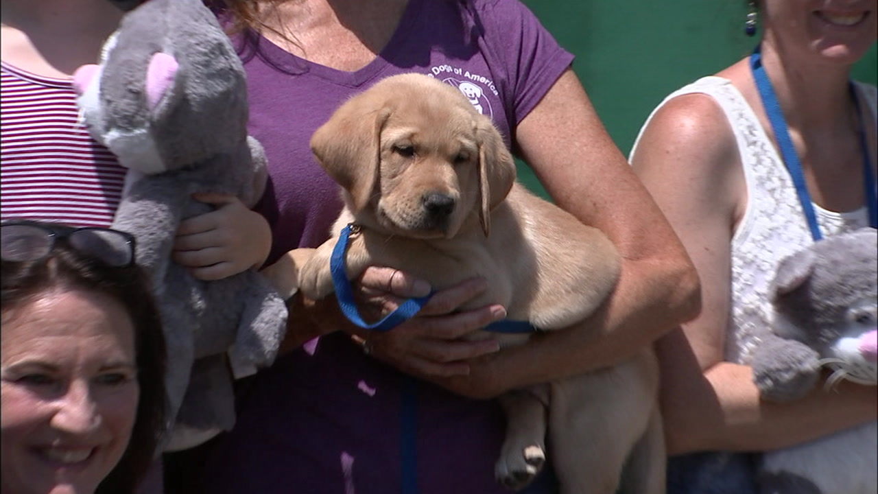 The Guide Dogs of America nursery in Sylmar is looking for families to help raise and train puppies.