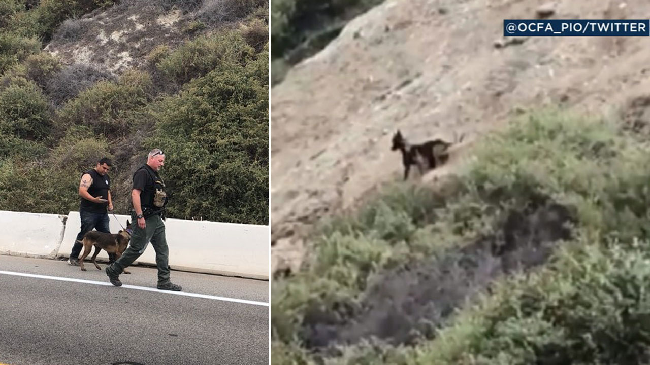 Orange County firefighters took on a daring dog rescue to save a German Shepard stuck on a cliff in Dana Point.