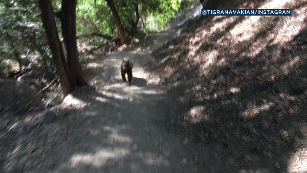 A black bear running at a couple who were on a family hike on the Monrovia Falls Trail is captured on video.