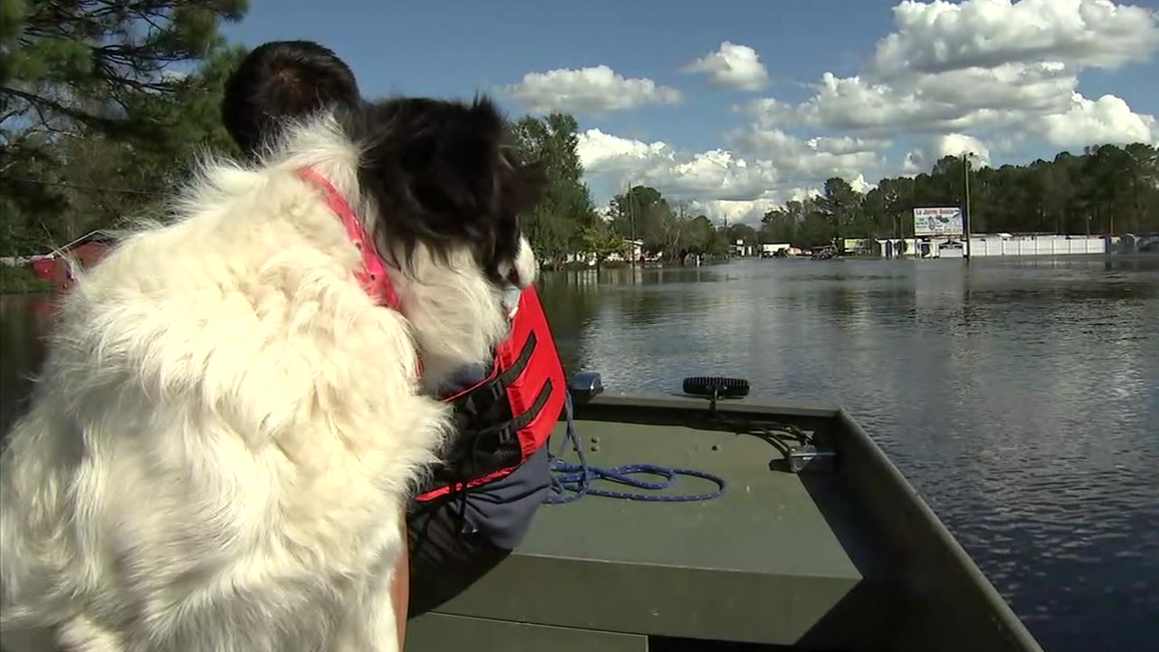 Duke, a dog rescued by Orange County firefighters, is shown during the boat ride back to his owner in North Carolina.