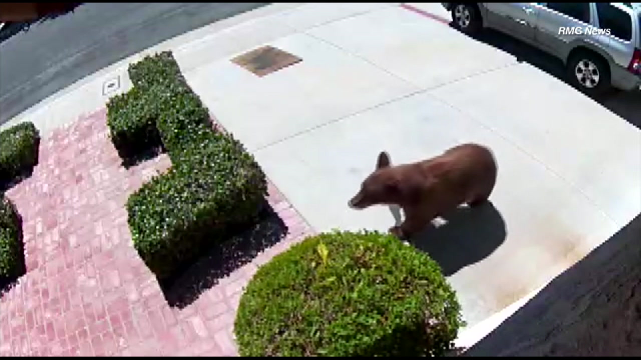 A bear was spotted roaming a neighborhood in Sylmar.