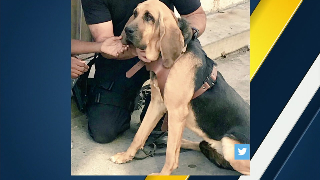 LAPD K-9 Molly used her scent-tracking skills to help find a missing nine-year-old girl, the department said.