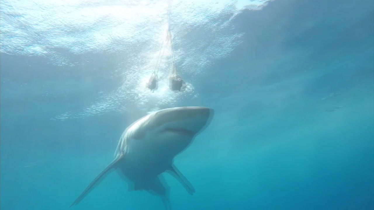 The city of Newport Beach has launched a pilot program that will help detect sharks in the water off the Balboa Pier using a high-tech buoy.