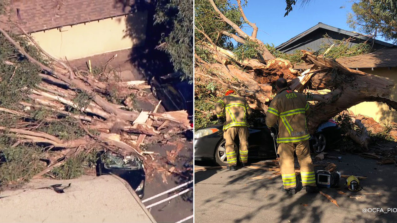 Orange County Fire Authority firefighters at the scene of a tree fall that killed a woman inside of a car in Tustin on Monday, Oct. 15, 2018.