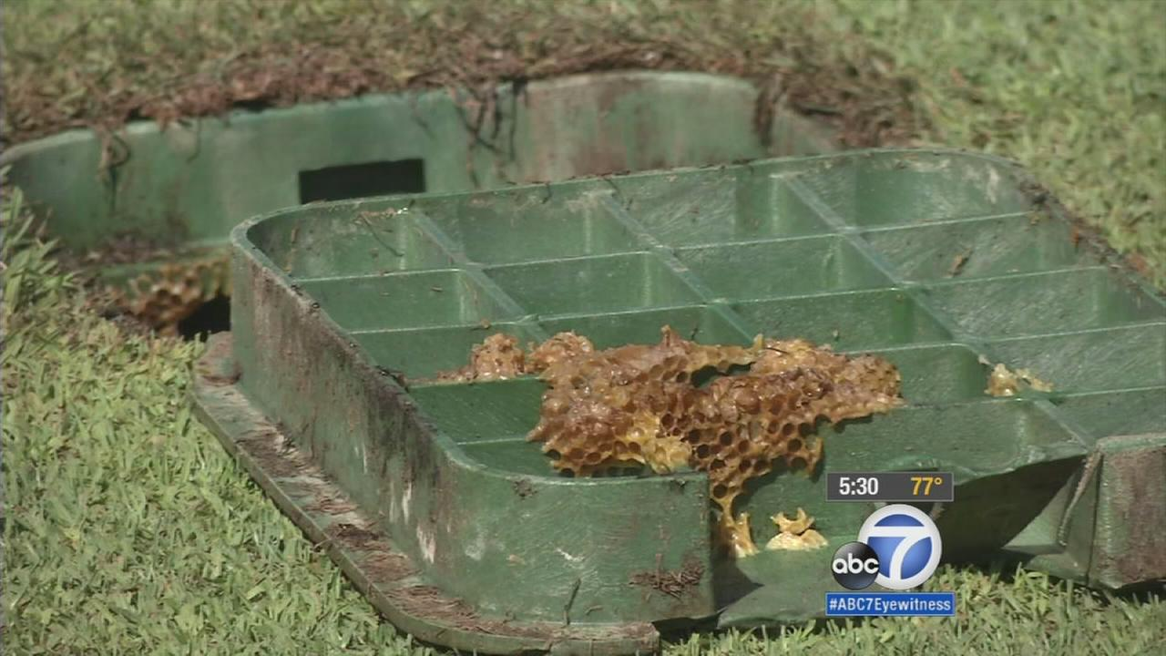 The remains of a bee hive are shown in a photo taken on Wednesday, Oct. 7, 2015.