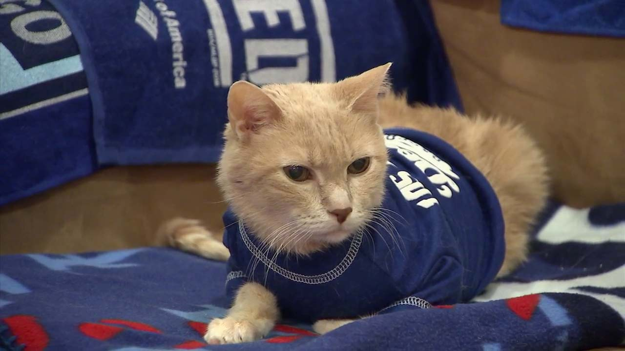 Meet Milo Kitty, the rally cat! Hes the Dodgers No. 1 feline superfan.