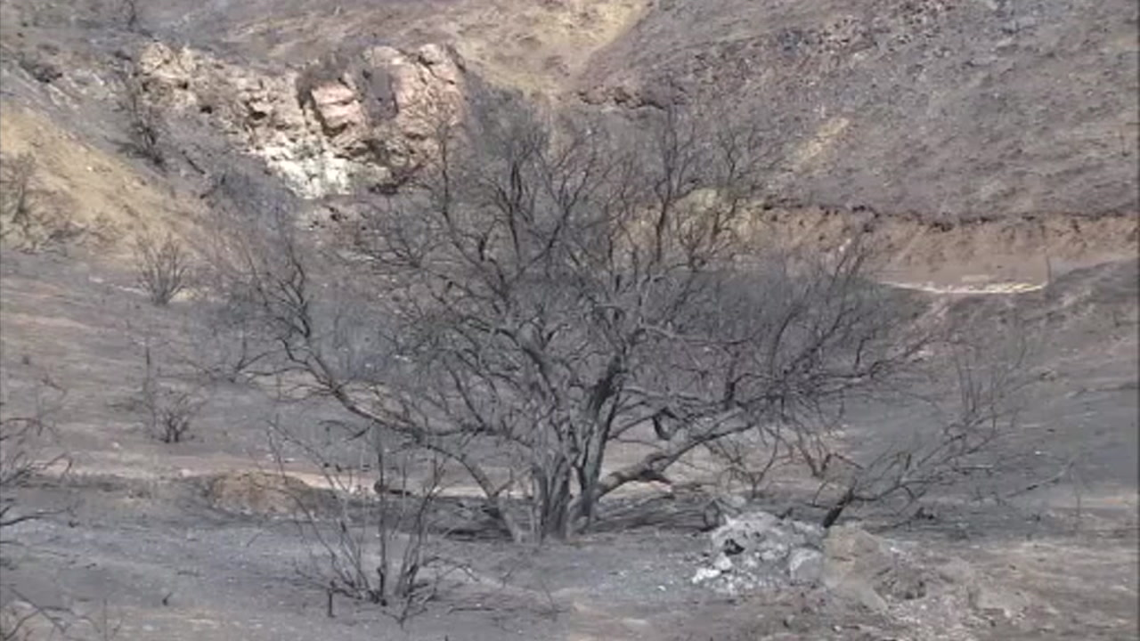 Trees are burned from the Woolsey Fire after it ripped through parts of L.A. and Ventura counties.