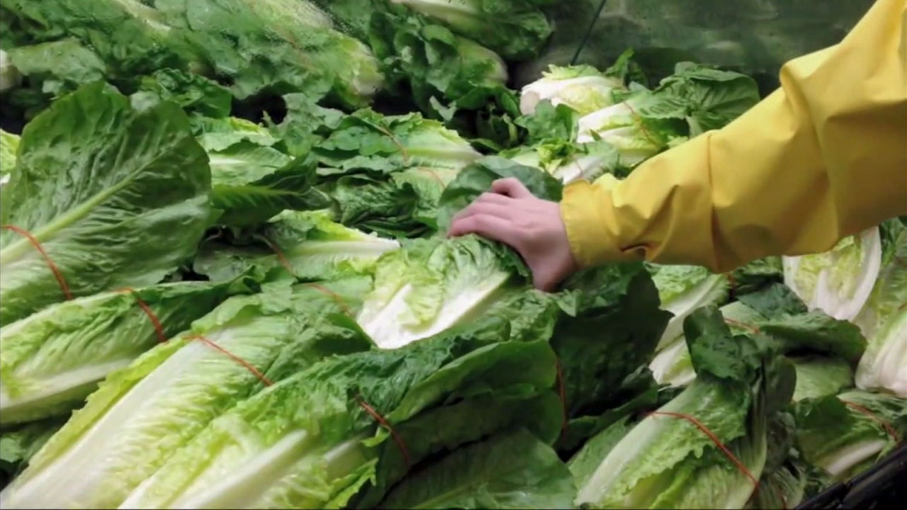 A file photo shows a person picking up romaine lettuce.