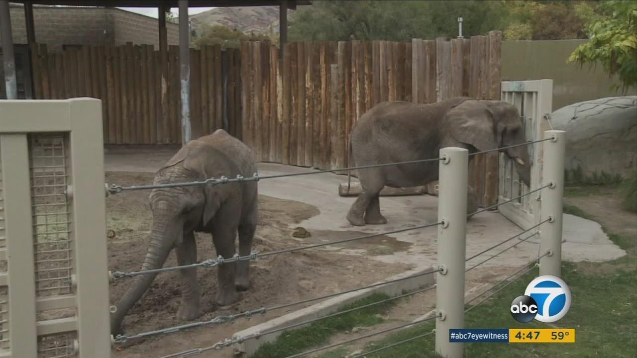 Elephants at Hogle Zoo in Salt Lake City, Utah.