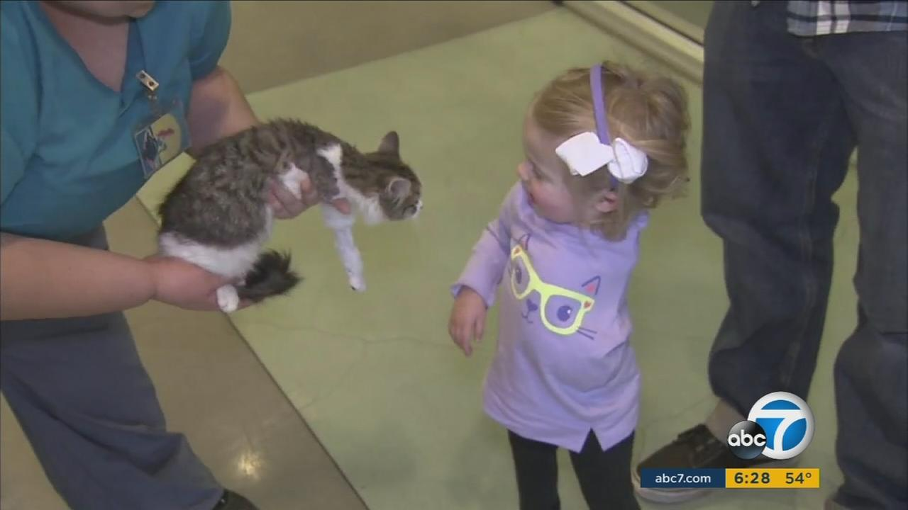 A three-legged kitten named Doc was adopted by the family of 2-year-old Scarlette Tipton on Wednesday, Dec. 30, 2015.