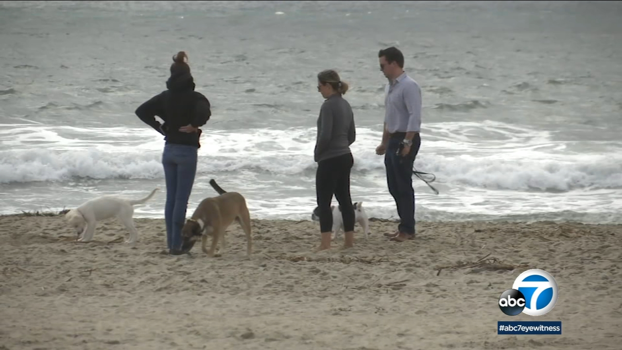 The pets who roam around Dog Beach in Newport Beach are causing damage to the habitat for two rare bird species, leading to concerns by environmentalists.