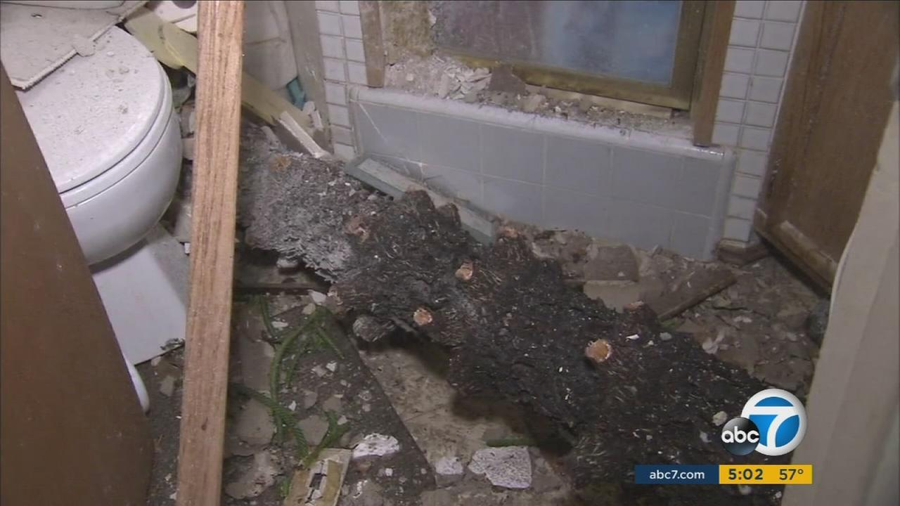 A tree limb broken off by fierce winds pierced through the roof of a home in Anaheim on Monday.