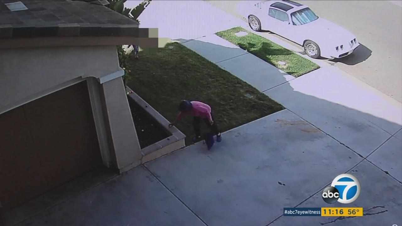 A thief is seen in this surveillance still image stealing Easter eggs from the yard of a home in Chula Vista on Sunday, March 27, 2016.