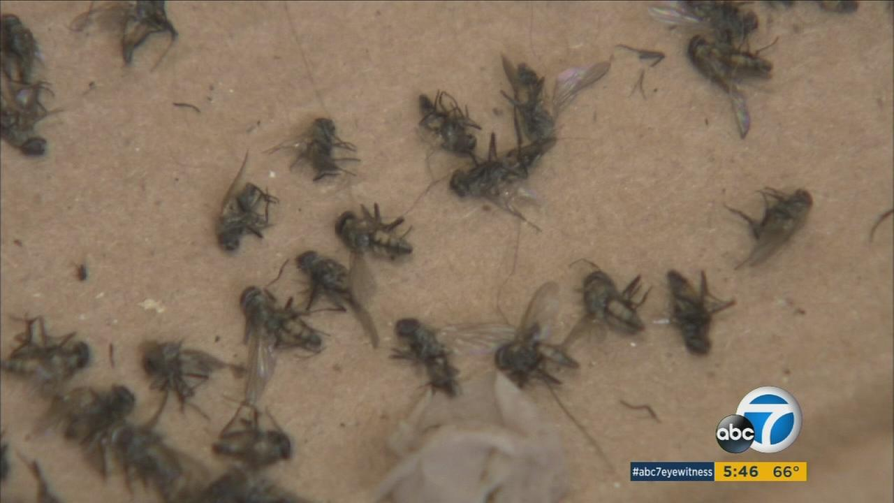 A Yucaipa neighborhood has been swarmed by flies and residents believe a collection of three chicken farms nearby are to blame.