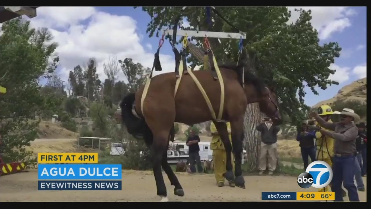 Fire officials used a crane to rescue a horse that fell 12 feet down a well at an Agua Dulce ranch.