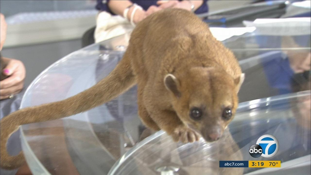 The American Humane Association visited the ABC7 studio on Wednesday, June 15, 2016.