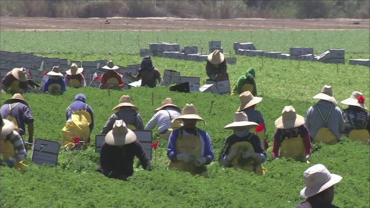Mandalay Berry Farms announced that it will be permanently closing its operations at nine ranches in Oxnard, California.