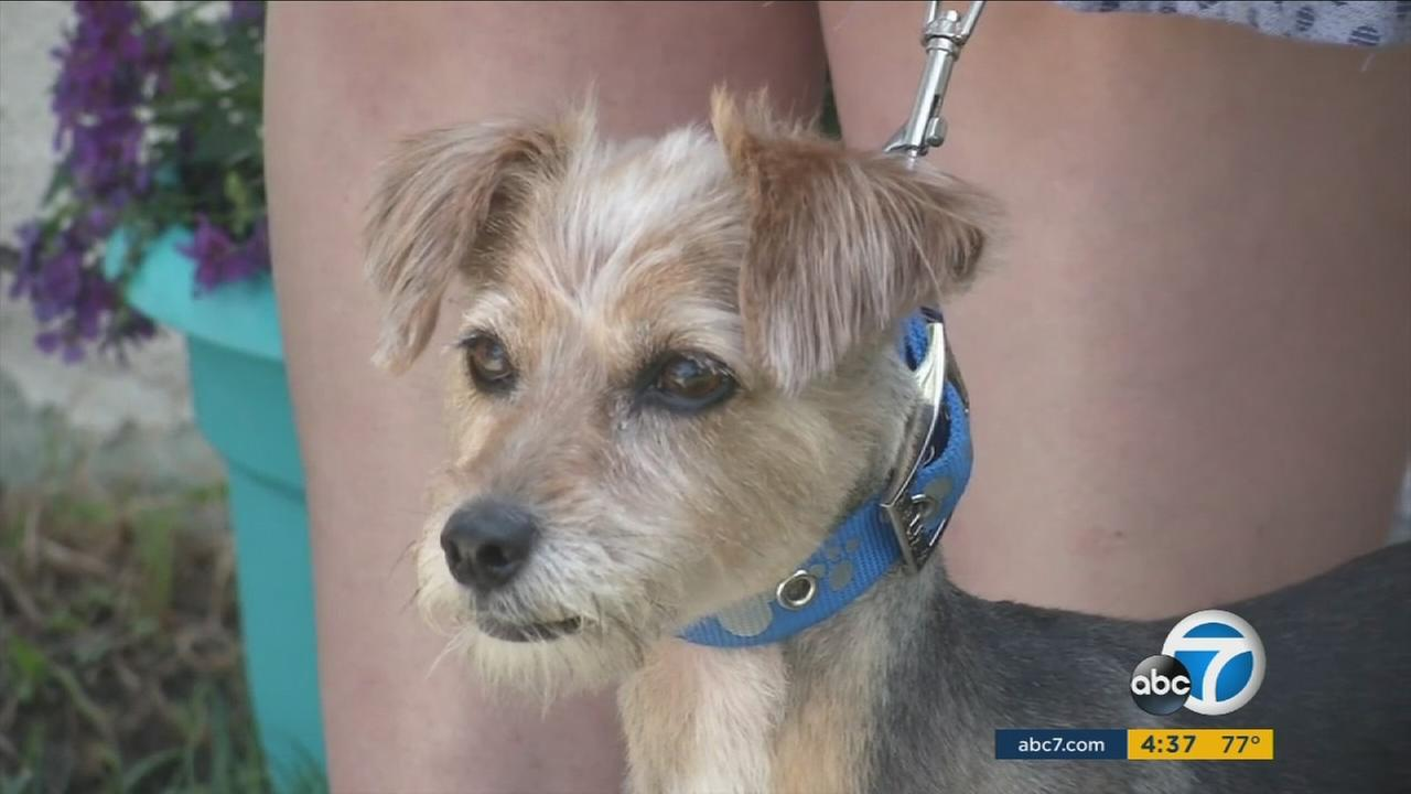 ADT security systems operator David Tompkins made a 911 call that saved Amber Coopers dog and home from a fire in Anaheim.