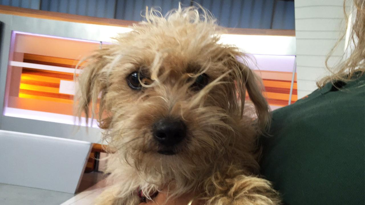 Our ABC7 Pet of the Week on Tuesday, July 26, is Rascal, a 2-year-old terrier mix. Please give him a good home!