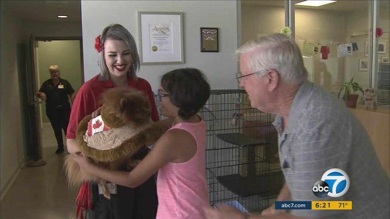 A Menifee familys Pomeranian named Brownie Bear is back home now after getting lost and ending up in Canada, more than 1,300 miles from home.