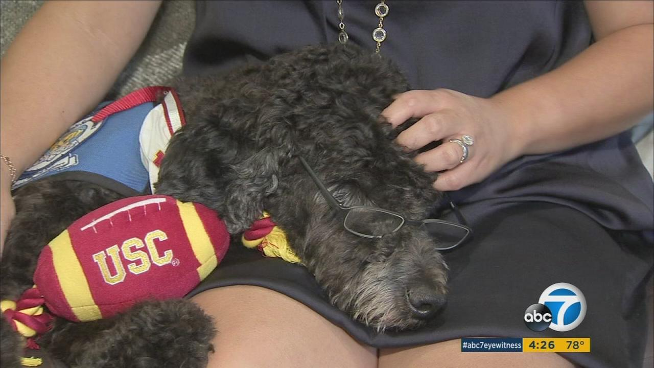 Professor Beauregard Tirebiter is shown doing therapy work with ABC7 health specialist Denise Dador.