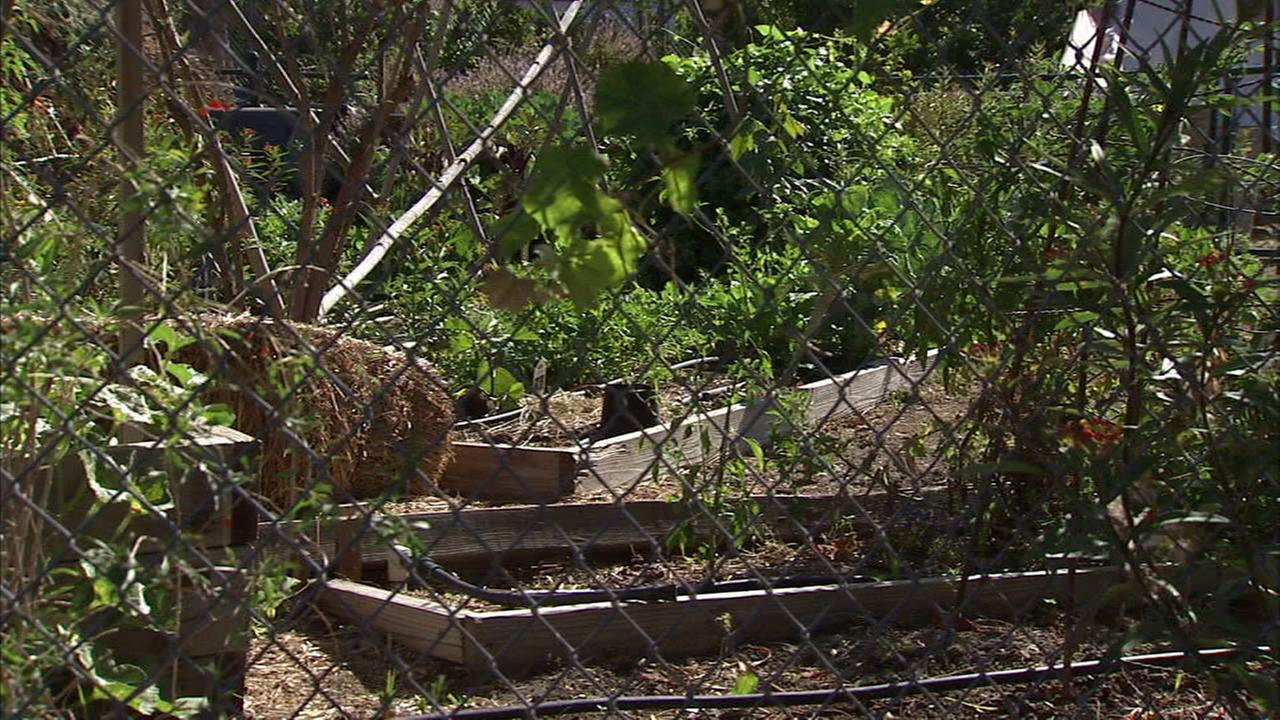LAUSD officials meet with parents after students became ill by eating poisonous mushrooms from a school garden in Silver Lake.
