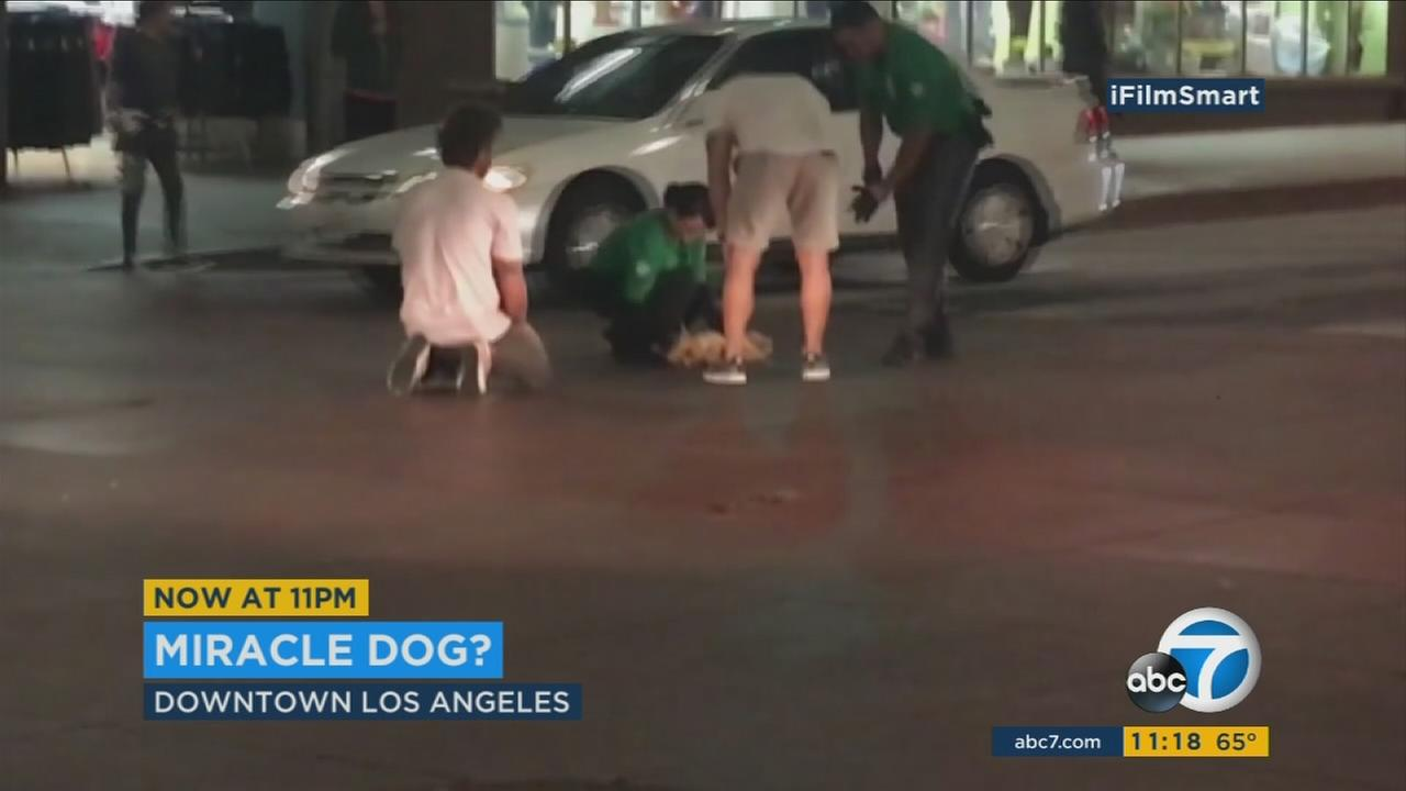 Dog sprinted suddenly toward its owner after animal control officials attempted a rescue.