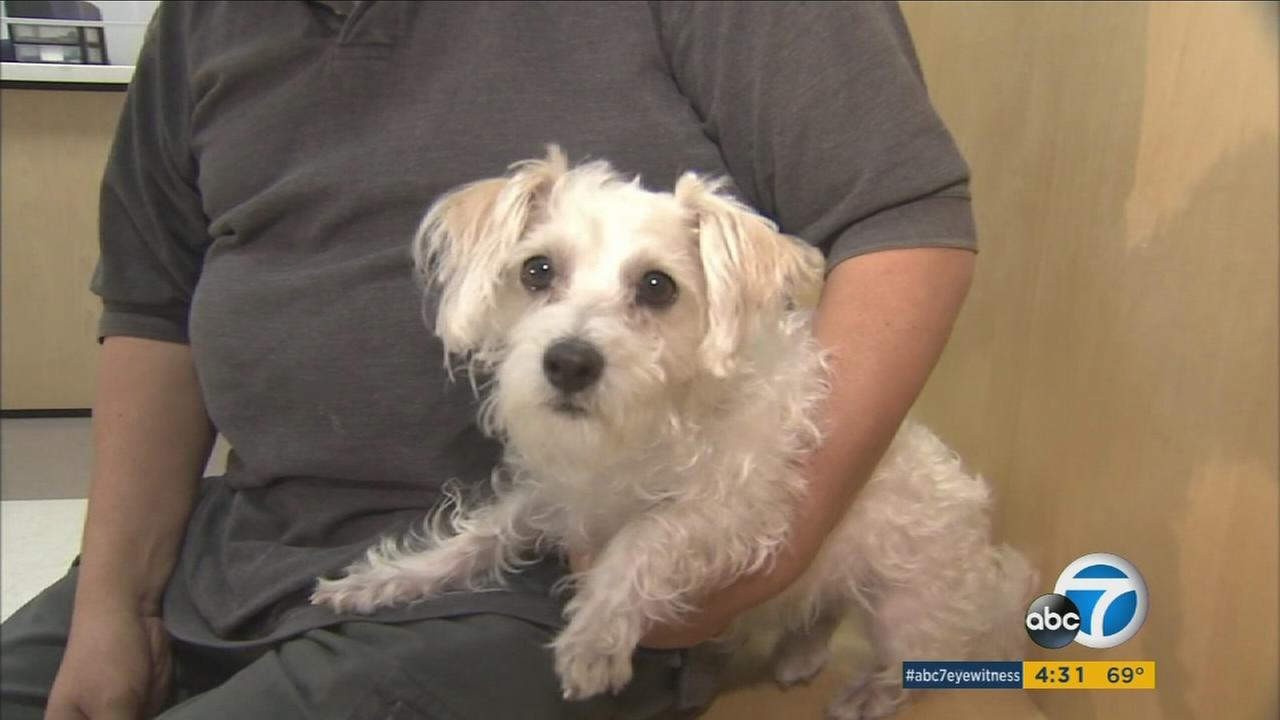 Shannah Tenner pleaded no contest on Tuesday for impersonating an animal cruelty officer in order to steal Cesar Aguilars pet poodle.