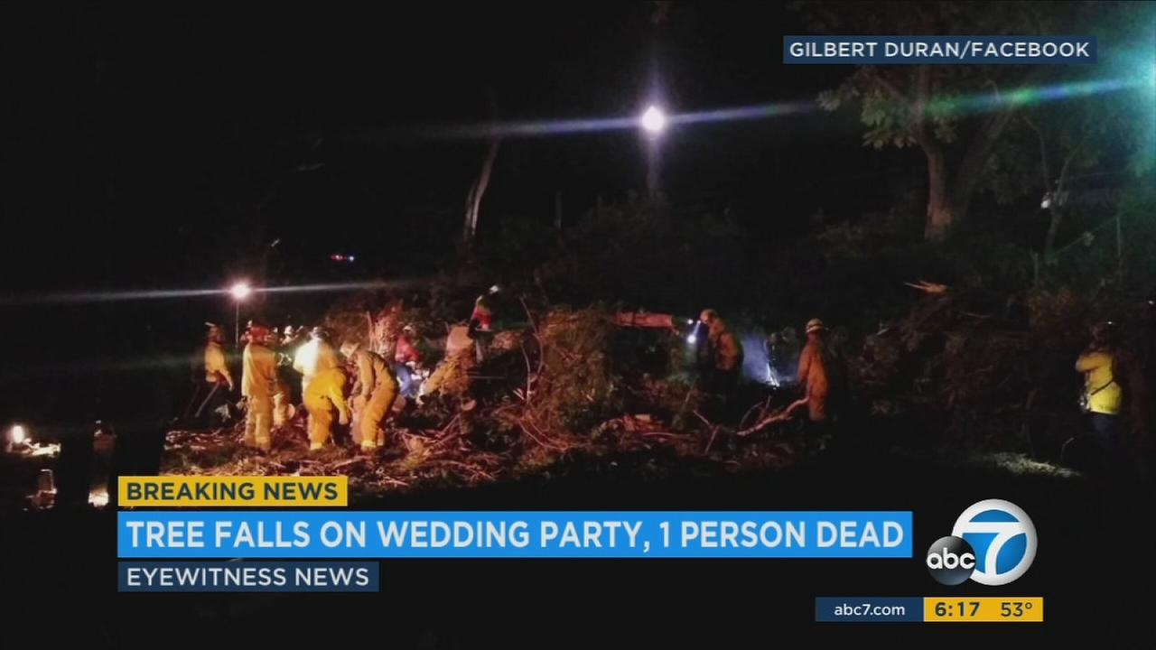 At least one person died and five others were injured when a tree fell on a wedding party in Whittier, fire officials said.