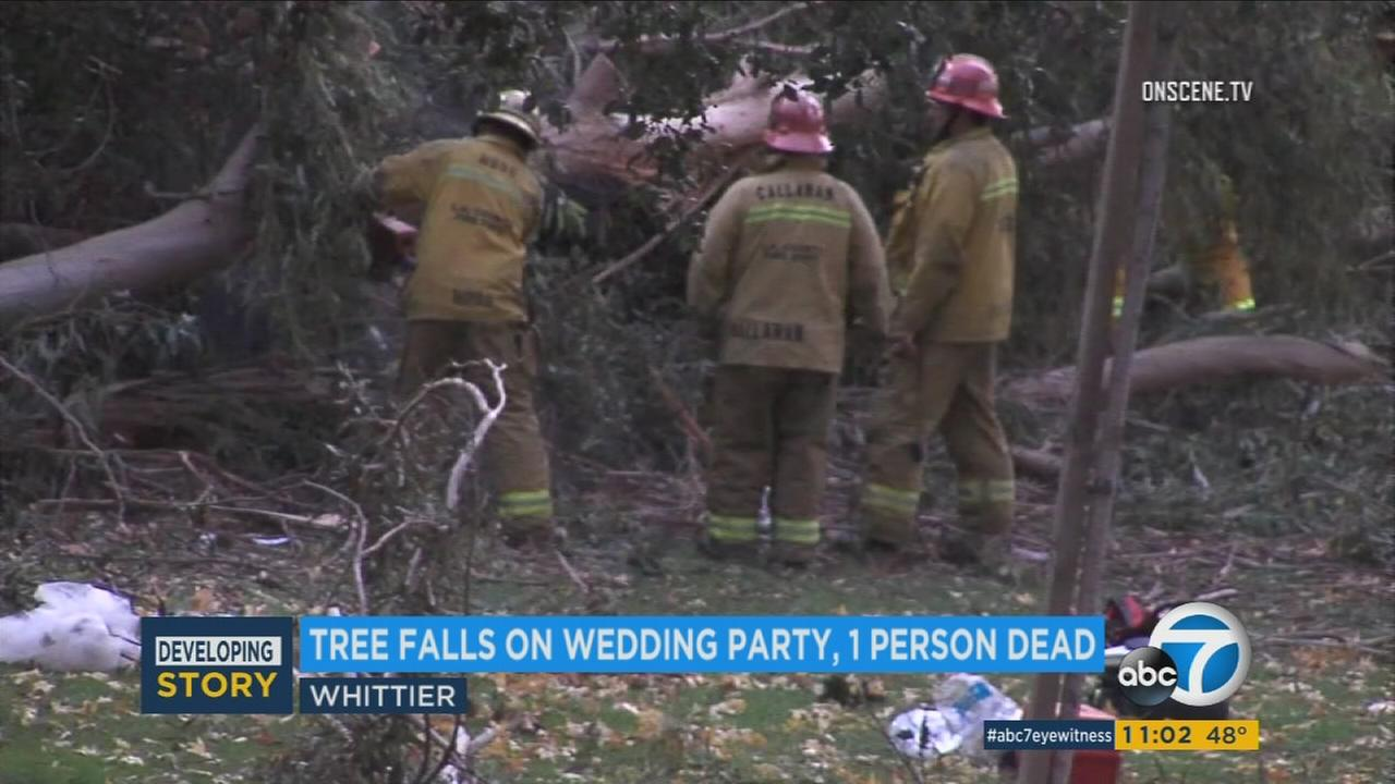 At least one person died and five others were injured - including a 4 year-old girl left in critical condition - when a tree fell on a wedding party in Whittier, fire officials said.