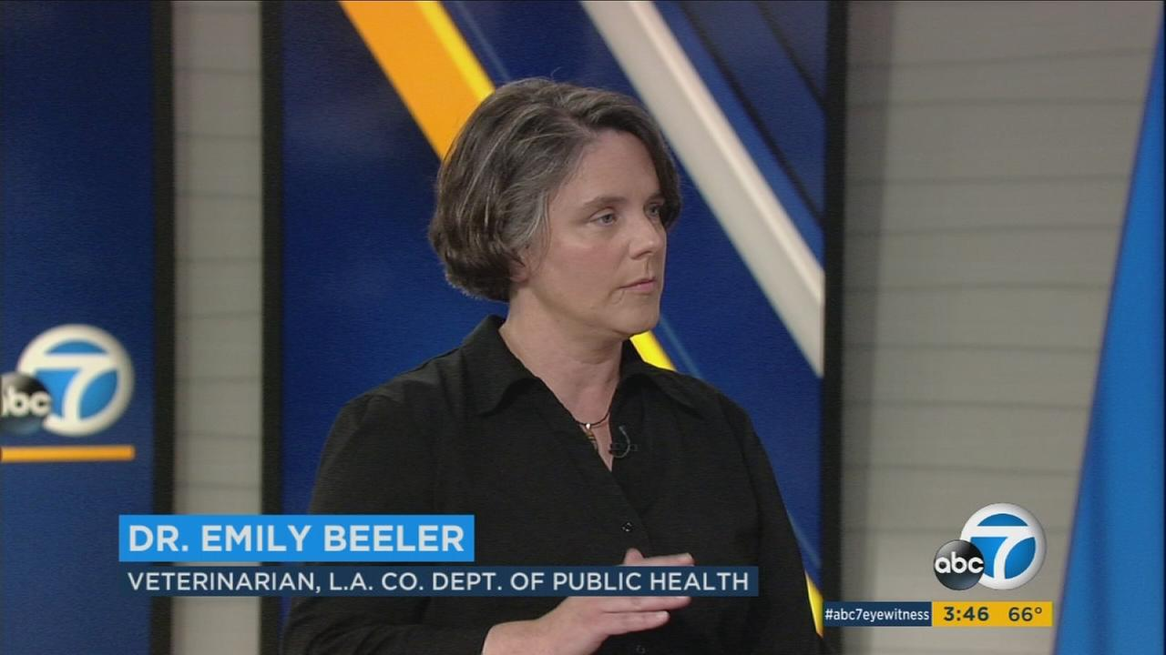 Dr. Emily Beeler, veterinarian with the Los Angeles County Department of Public Health, is shown during a studio interview on ABC7.