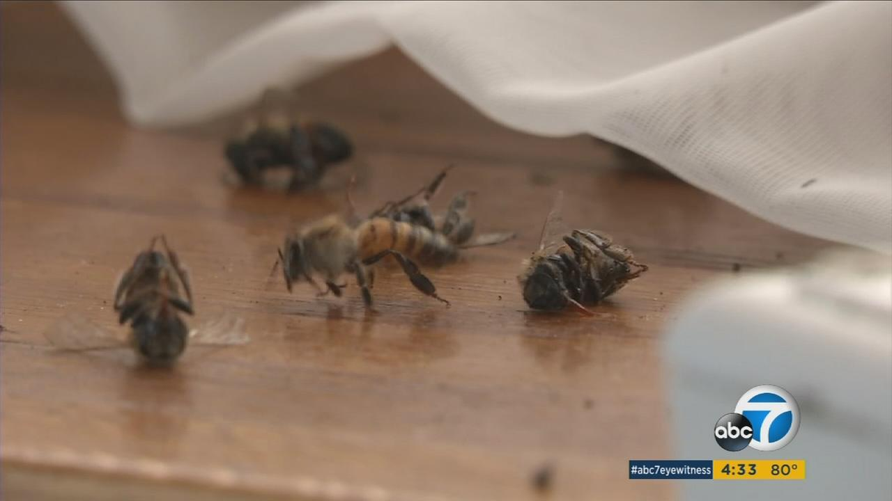 A Huntington Beach couple had to call in help after hundreds of bees invaded their home.