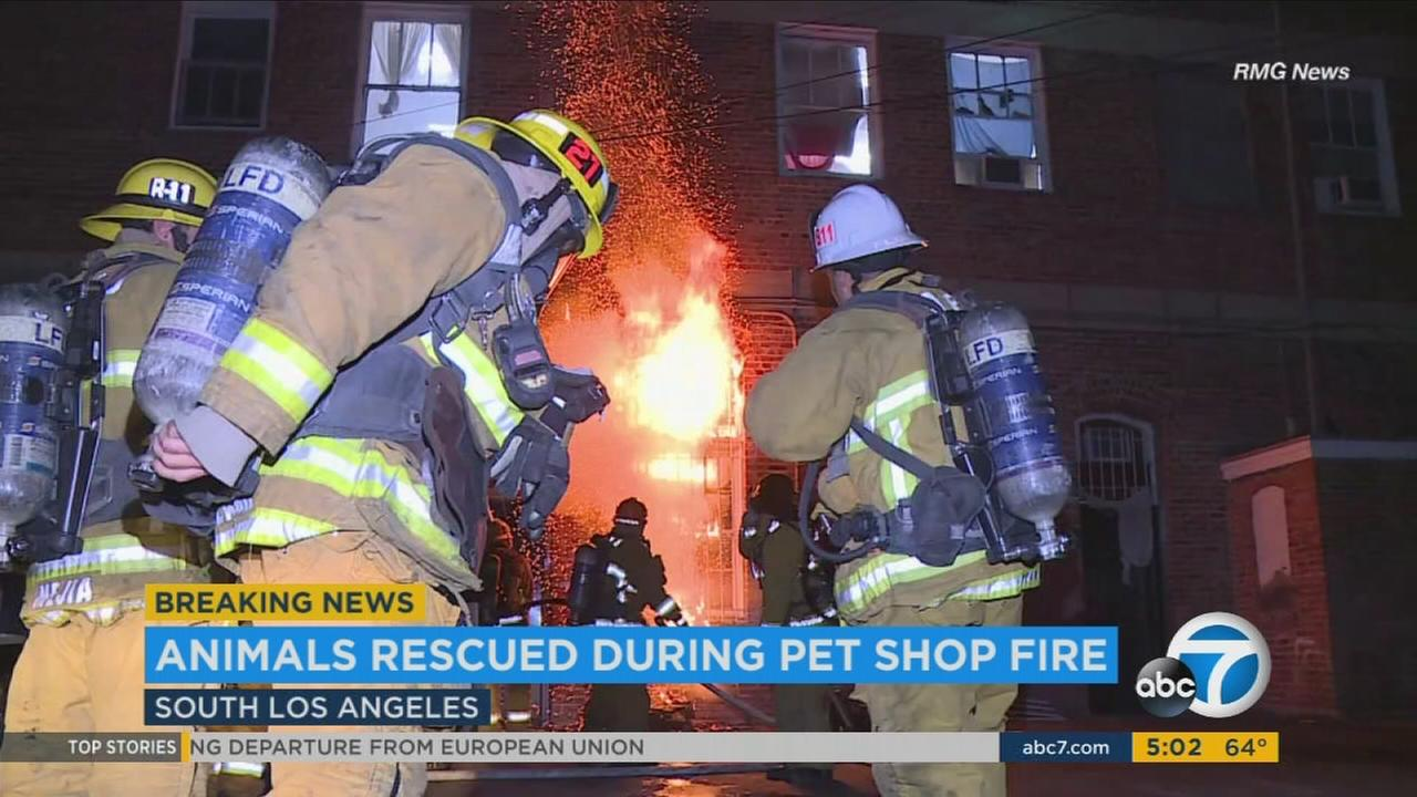 Firefighters rescued dozens of animals after a fire broke out Wednesday, June 21, 2017, at a pet store in South Los Angeles.