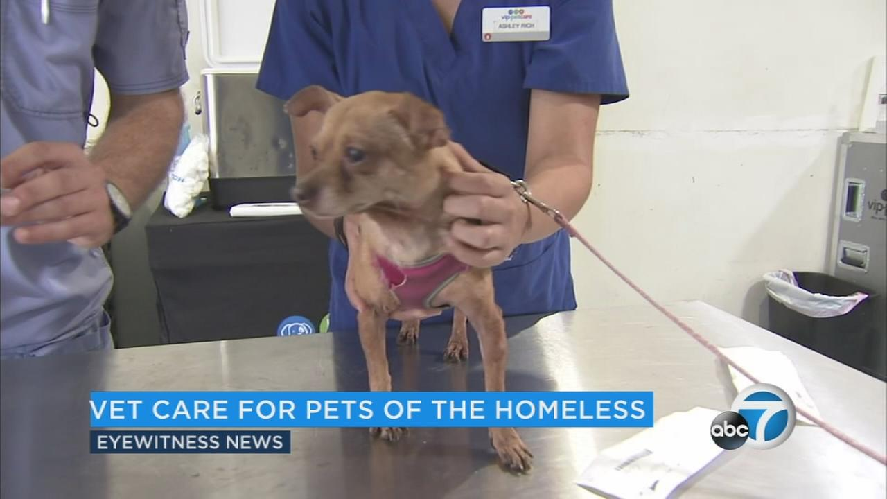 The latest count shows nearly 58,000 homeless individuals in Los Angeles County alone, and experts estimate that around 20 percent have a pet. Thats more than 10,000 dogs, cats and other animals.